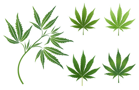 Vector Marijuana Green icon and blak Leaf set isolated on white background.