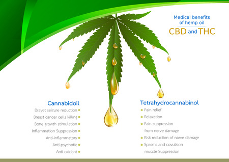 Marijuana concept and cannabis oil and legislation social issue as medical and recreational weed usage on green background symbols in a 3D illustration style.