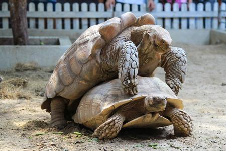 turtles have sex photo