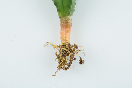 root of plant