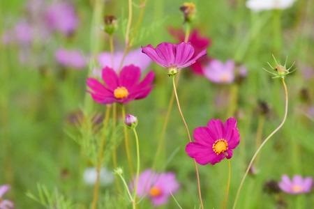 flower in the garden with blur background
