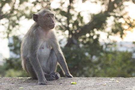 Wild monkeys are homesick for it.