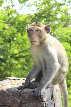 Wild monkeys are interested in something.