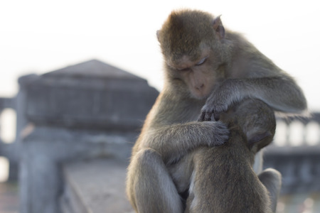 The warm embrace of the mother monkey forest.