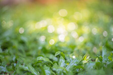green grass in the park close-up,Water drops on the green grass.Shallow focus effect. 写真素材 - 129955798