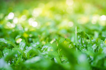 green grass in the park close-up,Water drops on the green grass.Shallow focus effect. 写真素材 - 129956590