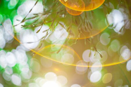 Blurred images of green leaves in the garden, Blurred bokeh  and fair lens as background In the natural garden in the daytime. 写真素材 - 129956954