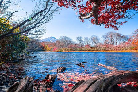 Japanese Hot Springs Onsen Natural Bath Surrounded by red-yellow leaves. In fall leaves fall in Yamagata. Japan. Фото со стока