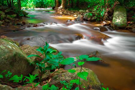 small river flows through the rocks in the green forest. Big tree and moss. 写真素材