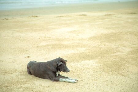 Black dog lying on the beach by the sea. Waiting for the owner to get lost alone.