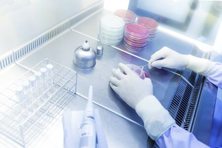 Scientists researching bacteria in jelly plate for a vaccine production.