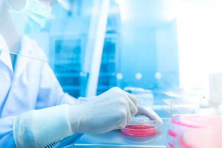 Coronavirus 2019-nCoV Coronavirus Outbreak Respiratory virus  , many scientists are researching bacteria in jelly plate,research for vaccine production. Stock Photo