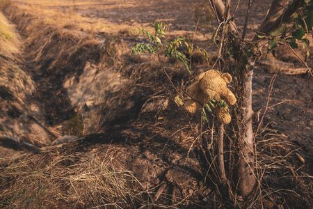 Teddy bear hanging on a burning tree Combustion in a wide field, forest fires resulting,the consequences of PM2.5 poisoning. Bush fire In australian outback.burnt trees suffered and black sole.