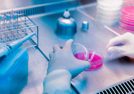 Coronavirus/Covid-19,Outbreak Respiratory virus epidemic , many scientists are researching bacteria in jelly plate,research for vaccine production.