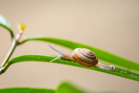 Snail on green leaf Zdjęcie Seryjne