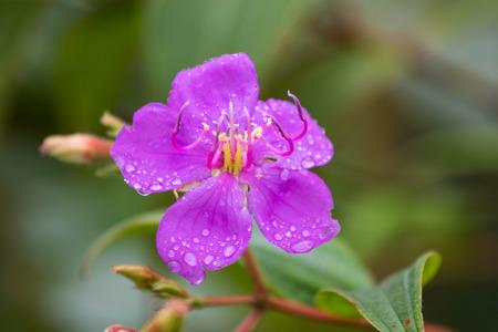 Purple flower with rain drop
