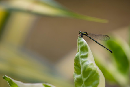 The Dragonfly macro on green plant