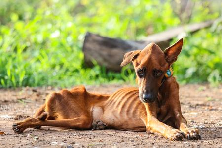 The sick dog is lying on the ground. Zdjęcie Seryjne