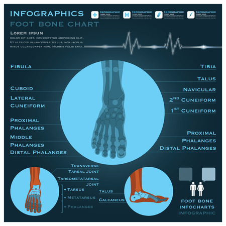 infocharts: Foot Bone Infographic Infocharts Health And Medical Science Background