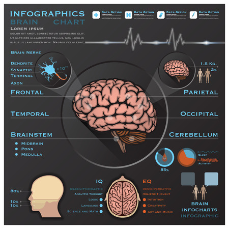 Brain And Nervous System Medical Infographic Infochart Design Template Vector