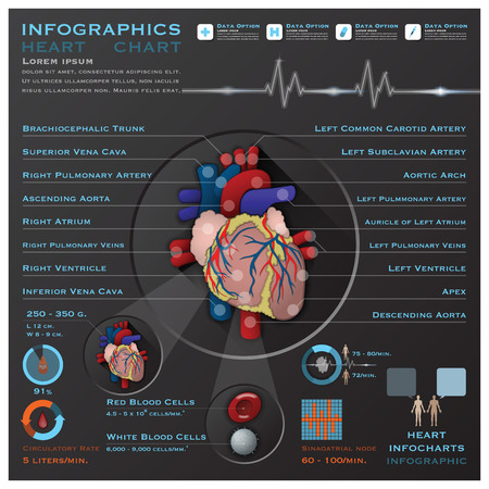 Heart And Blood System Medical Infographic Infochart Design Template
