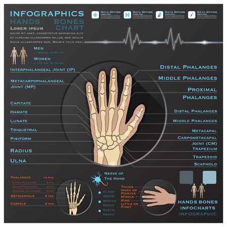 x ray image: Hand Bone Skelatal System Infographic Infocharts Health And Medical Science Background