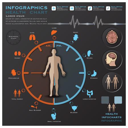 Biologische Uhr Gesundheit und medizinische Informationsgrafik Infocharts Wissenschaft Hintergrund Design-Vorlage Illustration