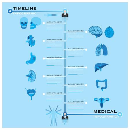 intestino grueso: Cronología Salud y medicina Infografía plantilla de diseño