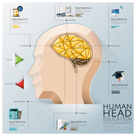 Human Head With Brain Three Dimension Polygon Education Infographic Design Template Vector