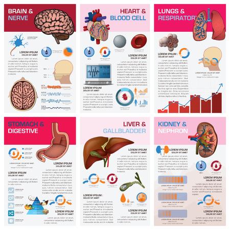 人間の臓器の健康と医療のグラフ図インフォ グラフィック デザイン テンプレート  イラスト・ベクター素材