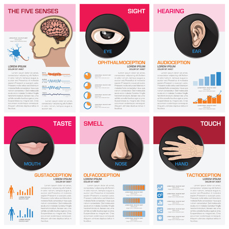 The Five Senses Chart Diagram Infographic Infographic Design Template 일러스트