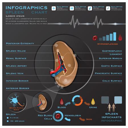 infochart: Spleen Anatomy System Medical Infographic Infochart Design Template Illustration