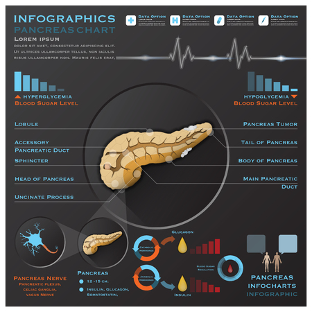 blood sugar: Pancreas Sistema Anatomia Medical Infografica Infochart Template Design Vettoriali