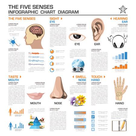 olfato: Los cinco sentidos Infografía Gráfico de la plantilla Diagrama de diseño vectorial