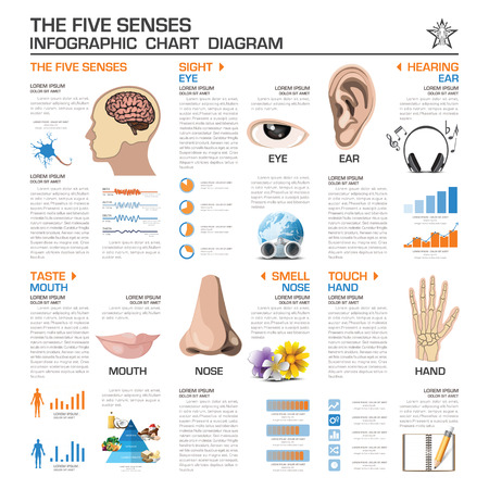 senses: The Five Senses Infographic Chart Diagram Vector Design Template Illustration