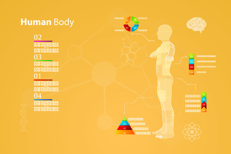 urinary tract: Vector illustration of medicine infographics. Schematic description of the human body.