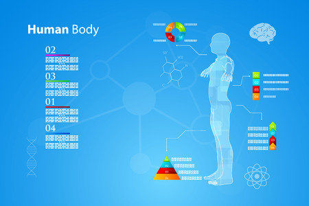digestive tract: Vector illustration of medicine infographics. Schematic description of the human body.