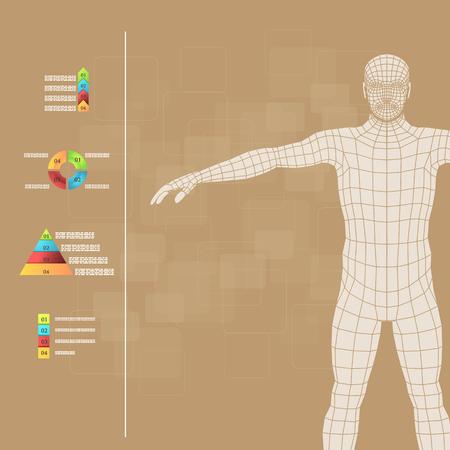 piramide humana: Ilustración del vector de infografía medicina. Descripción esquemática del cuerpo humano.