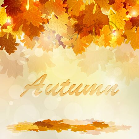autumn background: Background Vector Colorful autumn leaves.
