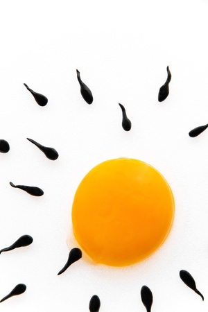 sex cell: concept image of Fertilisation