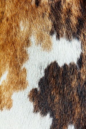 close up of cowhide background photo