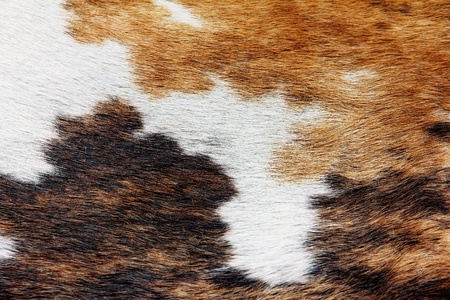 cowhide: close up of cowhide background Stock Photo