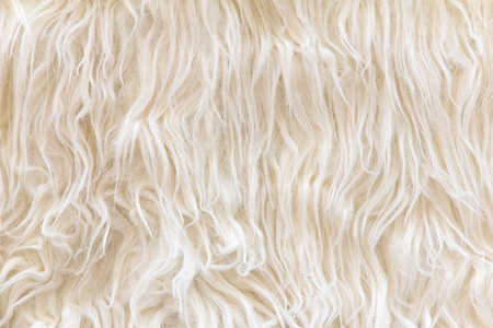 close up of sheepskin texture background photo