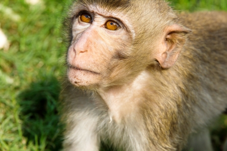 portrait image of Long-tailed macaque photo