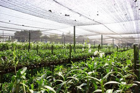 flower nursery: Orchid Farm