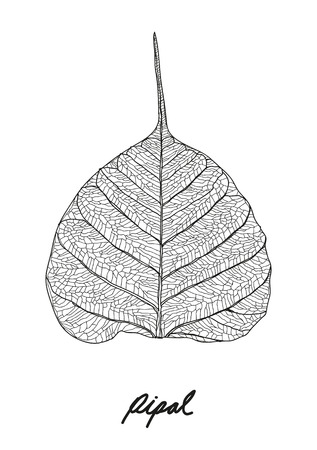 leaf close up: pipal leaf vector