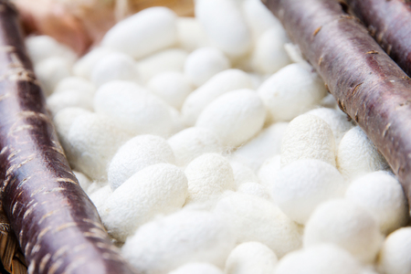 silkworm: Silkworm Cocoon  Stock Photo