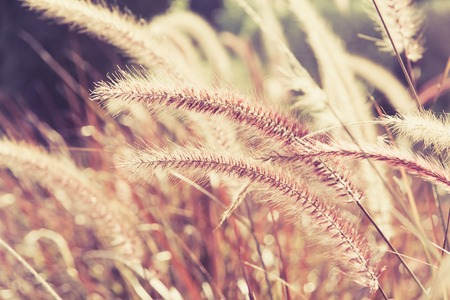 sour grass: Field Grass Blowing in the Wind Stock Photo