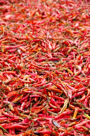 red chilli: Dried Red Chilli Background
