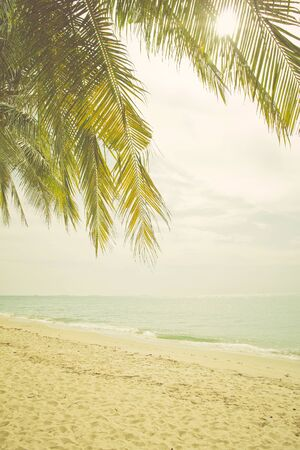 clima tropical: retro vintage style photo of palm trees on the beach